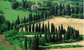 Tuscany Driving Tour - 5 Days, 4 Nights